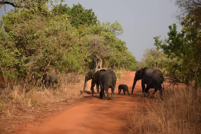 Éléphants au Camp de Nazinga au Burkina Faso | Jupette & Salopette