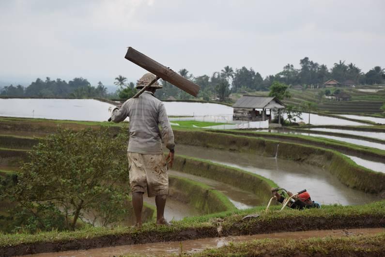 Rizières classées de Jatiluwih à Bali | Jupette & Salopette