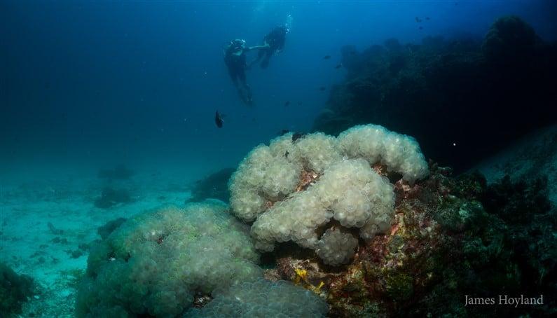 Plongée avec Blue Planet Divers | Jupette & Salopette