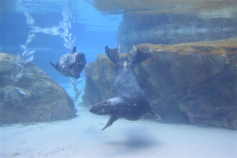 Lincoln Park Zoo | Jupette & Salopette