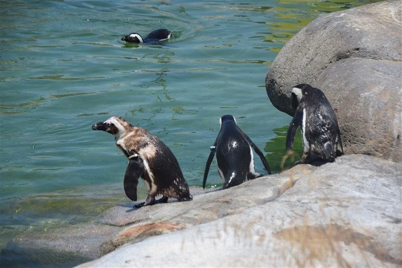 Zoo Lagos | Jupette & Salopette